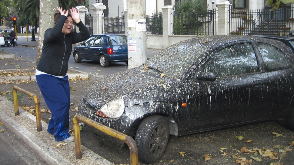 Limpiar caca de palomas